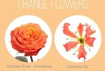 Pesca Arancio - Peach Orange flowers