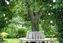 My garden dreams