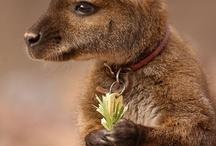Animales, lo más lindo de este mundo / lo más lindo es que no conocen la maldad