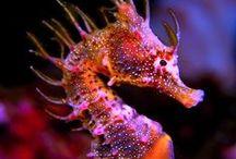 hippocampi