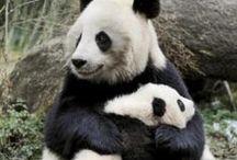 J'aime les pandas !