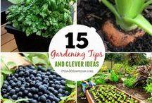 New Gardner / Easy Tips for New Gardeners