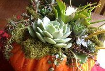 tökdíszítés pozsgásokkal, succulent pumpkins / tökdíszítés pozsgásokkal, succulent pumpkins