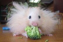 Cute & Fluffy / by Jane Lewis