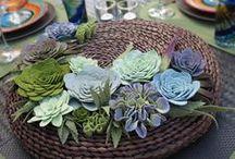 pozsgások filcből, felt succulents / pozsgások filcből, felt succulents