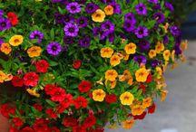 Composizione fiori e piante