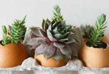 Húsvéti dekoráció, Easter decoration / Húsvéti dekoráció, Easter decoration