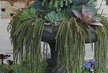 pozsgás szökőkút, Succulent fountain / pozsgás szökőkút, Succulent fountain, fountain as a planter for succulents