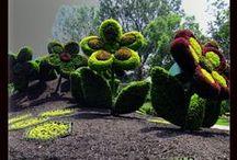 növényből készült szobrok, topiary / növényből készült szobrok, topiary