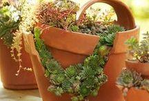 pozsgások törött cserépben, broken pots with succulents / pozsgások törött cserépben, broken pots with succulents