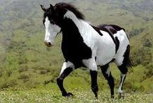 lovak, horses / lovak, horses