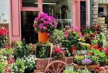 virágüzlet, flower shop / virágüzlet, flower shop