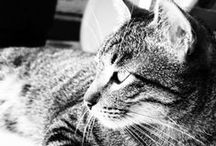 Gatinhos / My love for cats expressed here in images and photos!