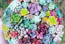 Succulents / Succulent inspiration for gardeners and crafters