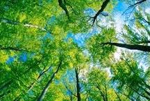 Lindas árvores / Salve o verde!