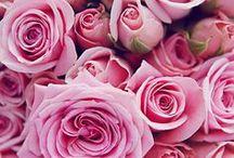 Roses / #roses #pinkroses #redroses #romantic #flowers #floral #serenataflowers #florist #yellowroses #romanticroses #romanticflowers