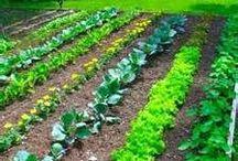 Bahçe-Bahçıvanlık