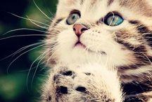 kitties...i love them