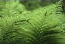 PLANTES PRINTANIÈRES / Vivaces herbacées, couvre-sols & grimpantes (ZONE 4)