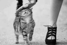 Cuteness Overload / by Heart Over Heels