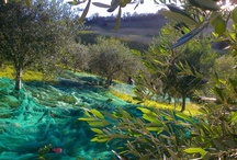 My Organic Farm / The sea, the hills,the mountain.All in 30 Km.Great place to live in armony with nature,while shipping wine with a slice of bread and extra vergin organic olive oil on the beach,watching the green hills on the horizon.