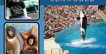 Seaworld, Bush Gardens & Aquatica Scrapbook