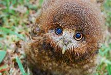 Sowy,sówki,soweczki  /owls/