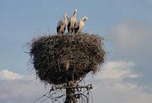 Ptaki  /birds/