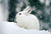 I Love Rabbits!!!!!!!! / Rabbits