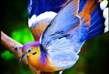 BIRDS,  BUTTERFLIES, FISH & CHAMELEONS THAT ARE COLOURFUL / ALL THE BEAUTY OF CREATION