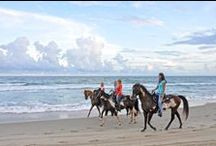 Spring Break Vacation Destinations / Looking for that perfect place to spend spring break? Here are four destinations with warmer temperatures and lots of things to do. Whether you are looking for a family or singles each of these destinations has something for everyone at any age.