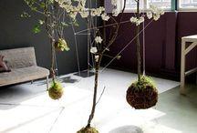 LA 3 | details _ hanging gardens