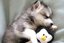 Puppies Plus