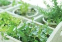 Gardening / by Lisa Rose @ Real Food Kosher