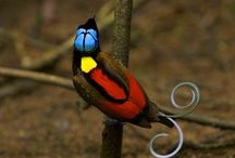 Birds / by Pranalee P