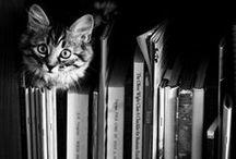 CAT / BLACK&WHITE