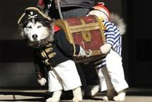 Pet Costumes / Fun Halloween Costumes for your pet, from Oya Costumes!