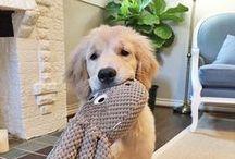 animaux et doudous / des animaux avec un ou plusieurs doudous , c'est si doux et charmant , images à partager ...