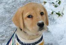 Animaux dans la neige ♪ ♫ / des animaux s'amusent dans la neige !