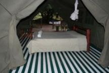 Masai Mara Budget Accommodation / Experience Masai Mara Tented Accommodation Enchoro Wildlife Camp, affordable semi luxury Masai Mara budget tented camping accommodation. Potentially you are looking to spend from USD 50 per person per night and that's all you pay for your Masai Mara budget accommodation.
