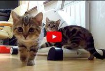 vidéos animaux ♥ / des vidéos amusantes , avec nos amis les animaux