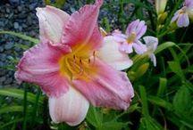 Plants for Sun / Great ideas for sun-tolerant plants.   So many choices!
