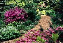 Plants for Shade / Lots of ideas for what kinds of plants thrive in shade.  Shade-tolerant plants for woodland, under trees, against walls, etc.