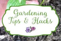 Garden Tips and Hacks / Find garden tips, tricks and hacks that make your work easier, your plants healthier, and your flowers prettier.