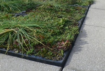 555 Fifth Avenue Green Roof / Essential Design + Build has the technical knowledge to manage green roof projects.
