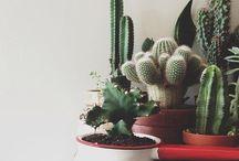 G r e e n / Plants n flowers