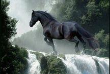 BEAUTIFUL HORSES / https://www.facebook.com/Fatadeimisteri