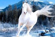 LOVLEY AND BEAUTY HORSES