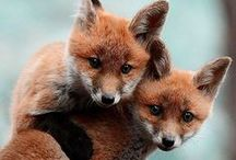 Foxes<3