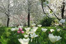 Summer Garden /Garten/ Trädgård / Puutarhakuvia / Puutarhatunnelmia... Lovely tones and atmosphere of the garden.
